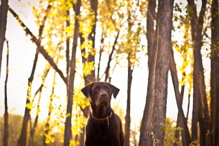 Dog in Autumn Garden Background for Android, iPhone and iPad