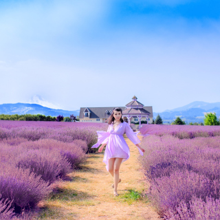 Kostenloses Summertime on Lavender field Wallpaper für 320x320