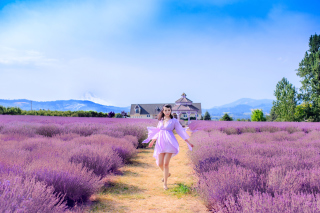 Summertime on Lavender field Wallpaper for Android, iPhone and iPad