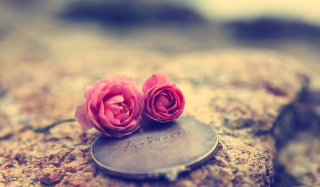 Miniature Roses Background for Android, iPhone and iPad