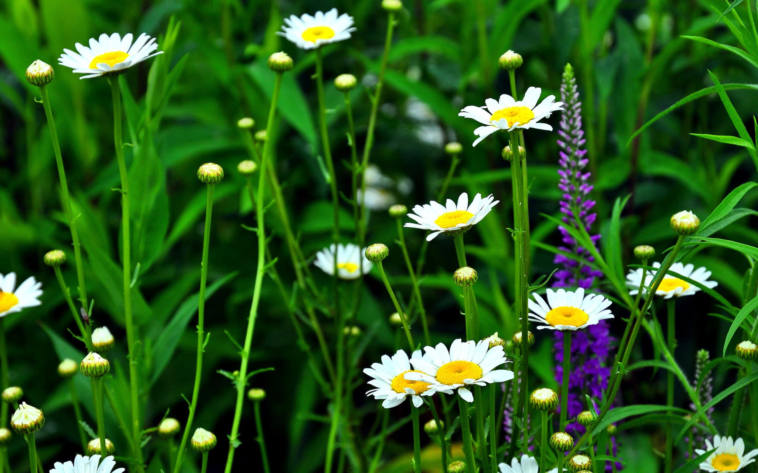 красивые картинки гифки лето ромашки для того