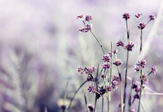 Wild Flowers Picture for Android, iPhone and iPad