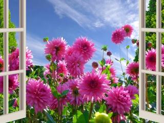 Beautiful Morning para Nokia X2-01