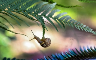 Little Snail Background for Android, iPhone and iPad