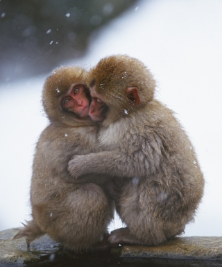 Monkey Love Picture for Nokia C1-01