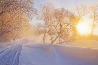 Morning in winter forest Wallpaper for Android, iPhone and iPad