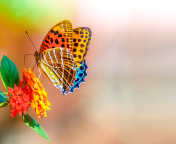 Screenshot №1 pro téma Colorful Animated Butterfly 176x144