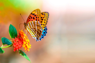 Colorful Animated Butterfly sfondi gratuiti per cellulari Android, iPhone, iPad e desktop