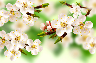 Spring Apple Tree - Fondos de pantalla gratis