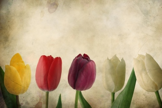 Tulips Vintage Picture for Android, iPhone and iPad