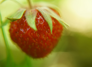 Strawberry Macro Wallpaper for Android, iPhone and iPad