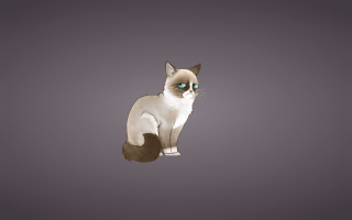 Grumpy Cat sfondi gratuiti per cellulari Android, iPhone, iPad e desktop