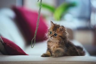 Kitten Wallpaper for Android, iPhone and iPad