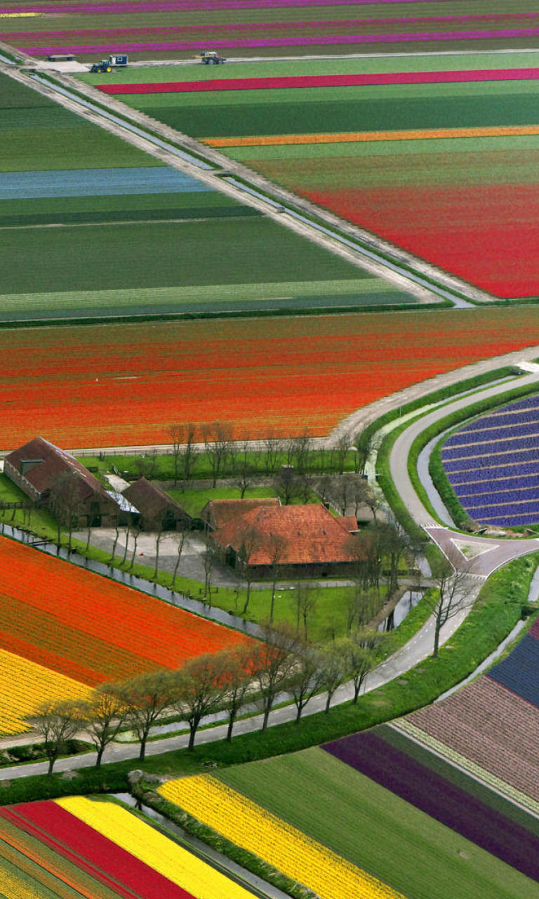 Screenshot №1 pro téma Dutch Tulips Fields 768x1280