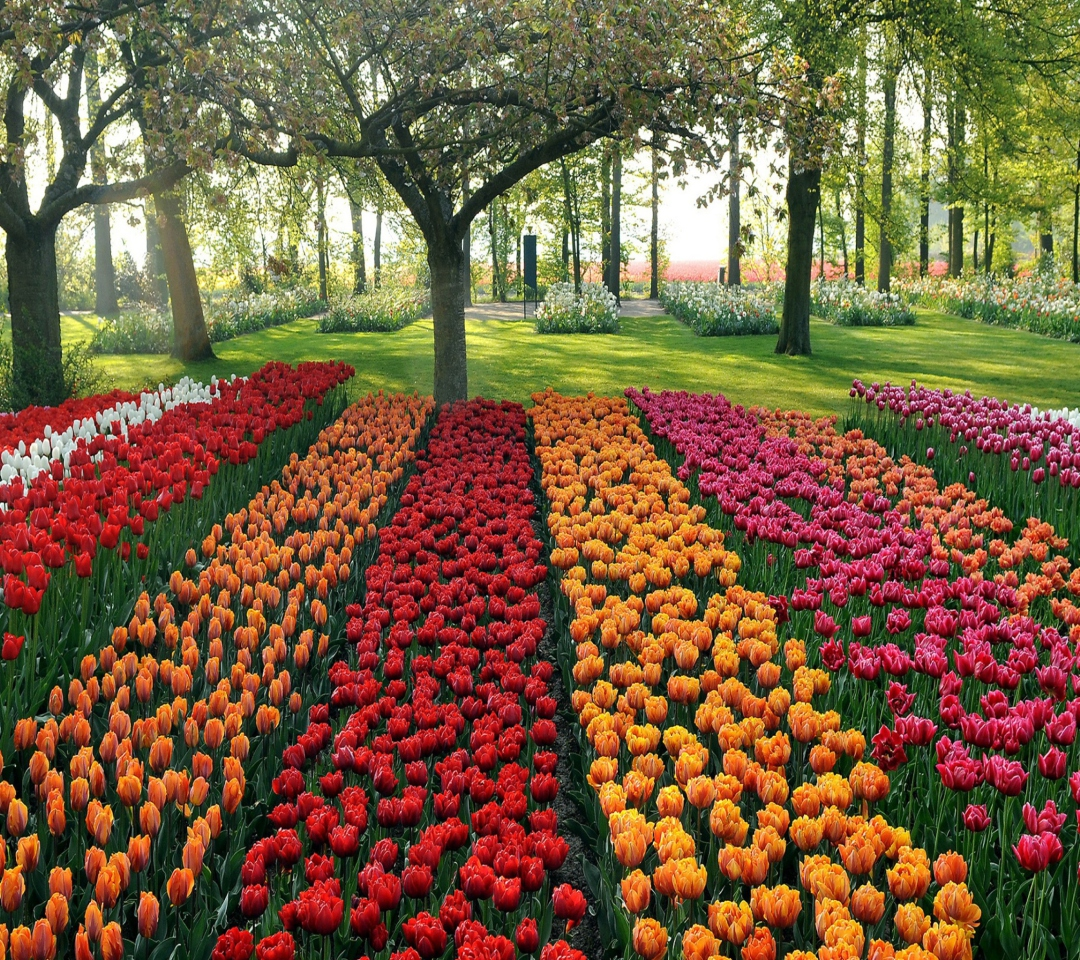 Tulips Park para Motorola RAZR XT910