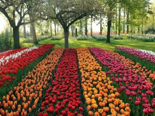 Tulips Park para Nokia X2-01
