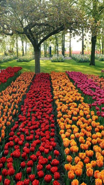 Tulips Park para Nokia 5230