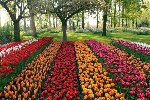 Tulips Park para LG E400 Optimus L3