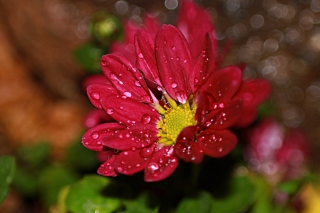 Free Flower Drops Picture for Android, iPhone and iPad