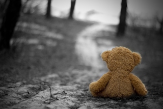 Free Lost Teddy Bear Picture for Android, iPhone and iPad