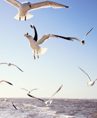 Seagulls Over Sea Wallpaper for 240x320
