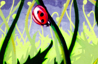 Ladybug Painting sfondi gratuiti per cellulari Android, iPhone, iPad e desktop