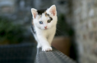 Cute Cat 2 Colors Eyes Wallpaper for 1400x1050