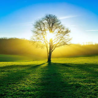Tree Shadow on field in sunlights - Fondos de pantalla gratis para iPad 2