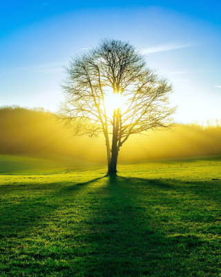 Tree Shadow on field in sunlights - Fondos de pantalla gratis para Nokia Asha 311