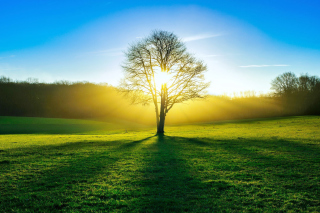 Tree Shadow on field in sunlights Wallpaper for Android, iPhone and iPad