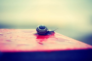 Snail On Wet Surface Picture for Android, iPhone and iPad