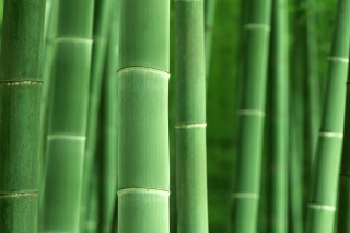 Green Bamboo sfondi gratuiti per cellulari Android, iPhone, iPad e desktop