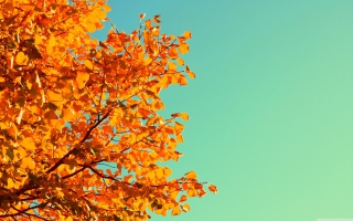 Autumn Wallpaper for Android, iPhone and iPad
