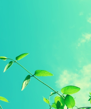 Summer Sky Wallpaper for 1080x1920