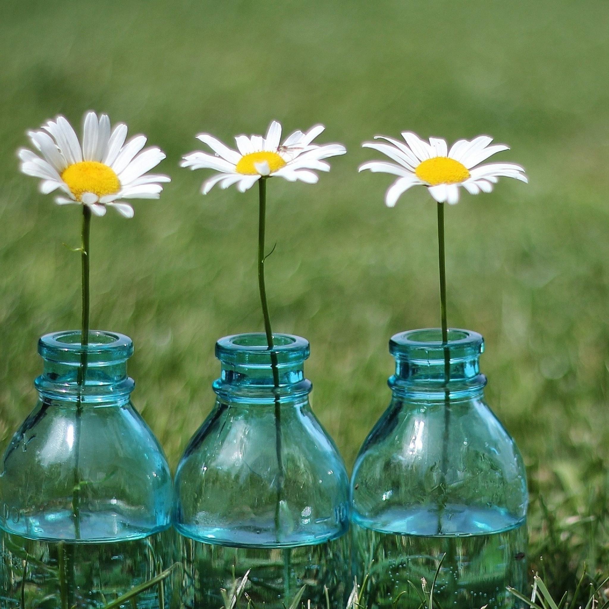 Бутылочка в траве загрузить