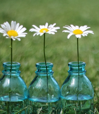Kostenloses Daisies In Blue Glass Bottles Wallpaper für Nokia Asha 308