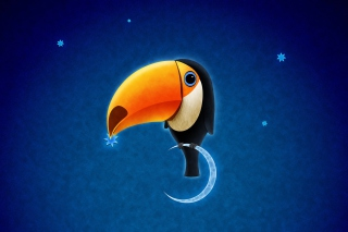 Toucan Bird sfondi gratuiti per cellulari Android, iPhone, iPad e desktop