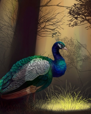 Free Peacock Picture for Nokia Asha 306