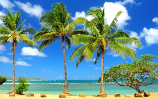 Palm Trees Background for Android, iPhone and iPad