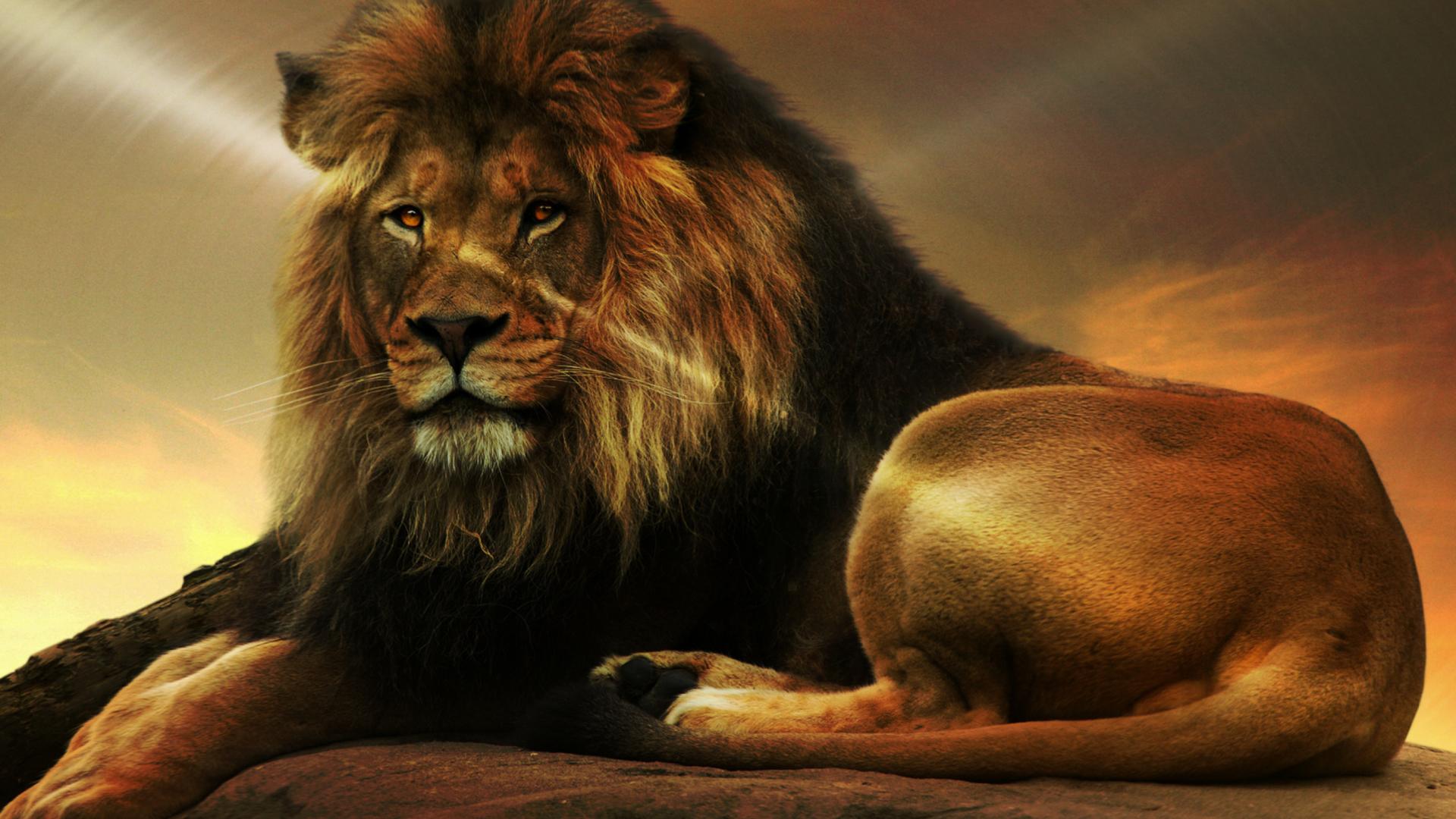 HD Lion for 1920x1080 Wallpaper Full Desktop