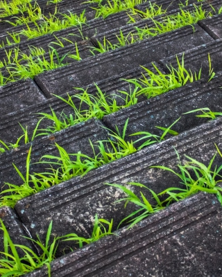 Grass Growing Fast sfondi gratuiti per Nokia C6