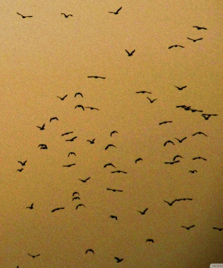 Birds Background for Nokia 5800 XpressMusic