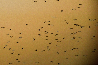 Birds Picture for Nokia Asha 200