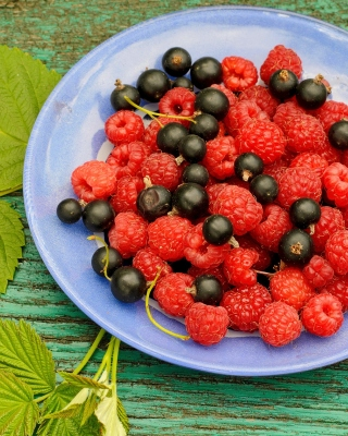 Free Berries in Plate Picture for Nokia Asha 300