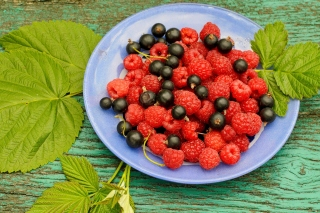 Berries in Plate Wallpaper for 1024x768