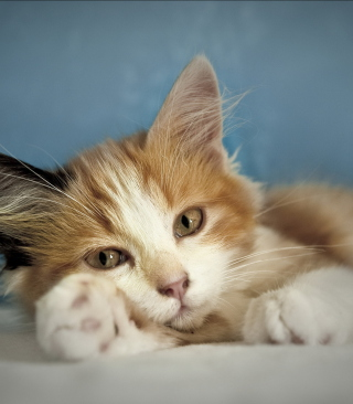 Cute Multi-Colored Kitten Background for HTC Titan