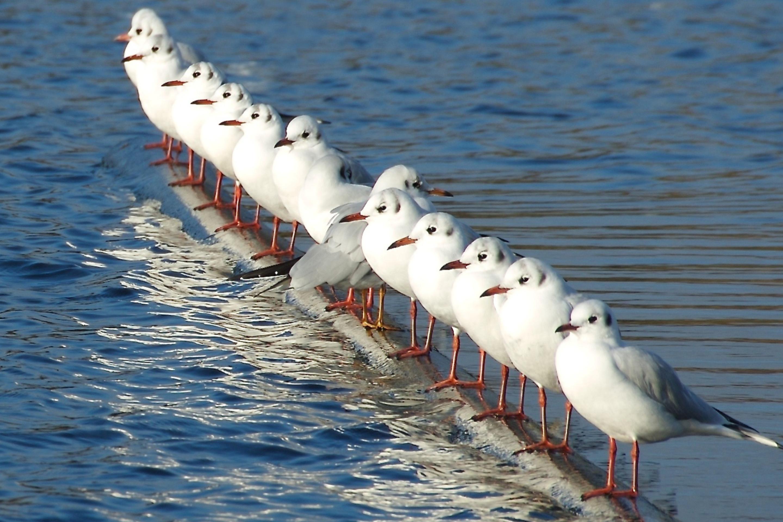 Открытка, прикольная картинка чайки