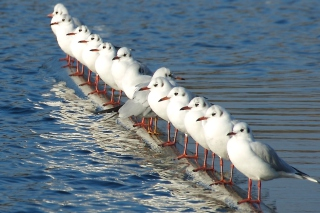 White Seagulls Background for Android, iPhone and iPad