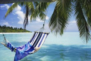 Free Hammock Under Palm Tree Leaves In Maldives Picture for Android, iPhone and iPad