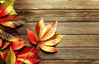 Free Autumn Leaves Picture for Android, iPhone and iPad
